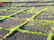 5 Cara Membasmi Lumut Pada Conblock (Paving Block)